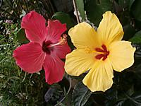 Pa090148_hawaianiero_2
