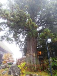 Pa230484_sanbonsugi