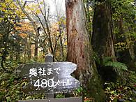 Pa230573sugi_2