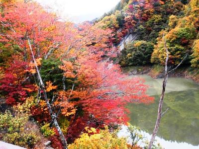 Pa230610buroguburogu