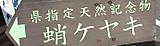Rimg0321takokeyaki_3