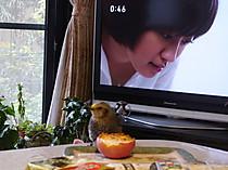 Rimg0013hiyodori_15