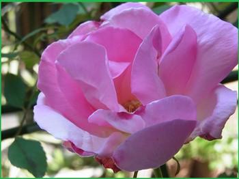 Rimg0069_pinku_5