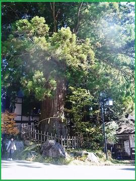 Rimg0411burogusugi