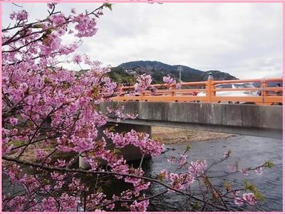 Rimg0613kawazu15_hasi