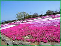 Rimg0009misatosakurasouburogu_2