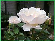 P6020124saga_2