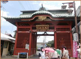 P6230135_ajisaajisai_3