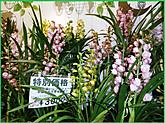 Pc230529burogu23_2