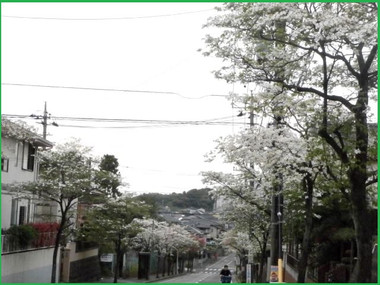 P4240083hanamizuki