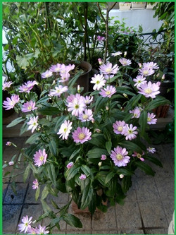P4290003_1miyakowasure_2