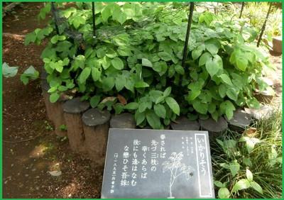 P5210097ikarisou98_2