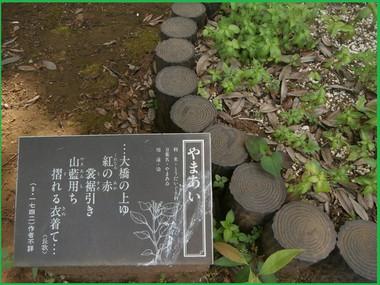 P5210105_1burogu