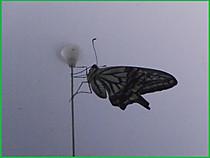 P8220026ageha
