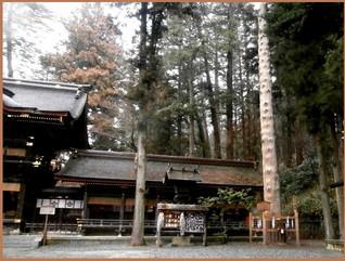 P3210149suwataisyawakamiya_3