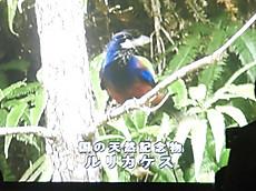P6120406burogu