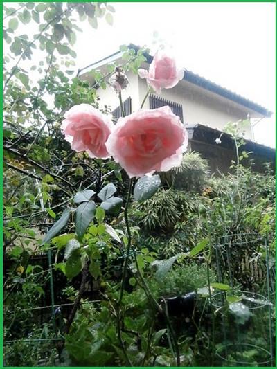 Pa221354nurogu_aiko