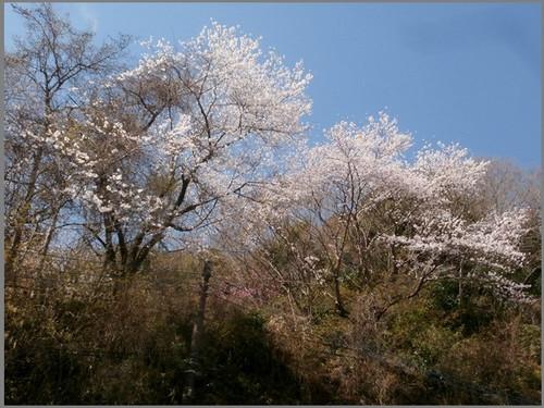 P3302466_taiheiyama_4