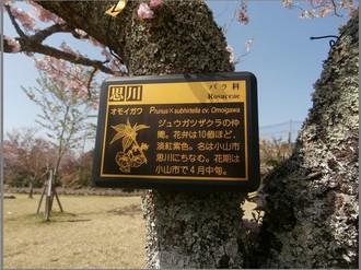 P4042760omoigawa