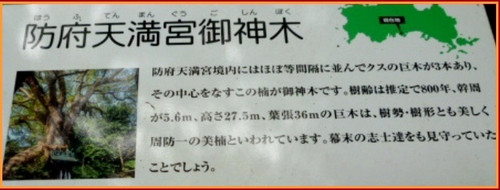 P1390870burogu_3