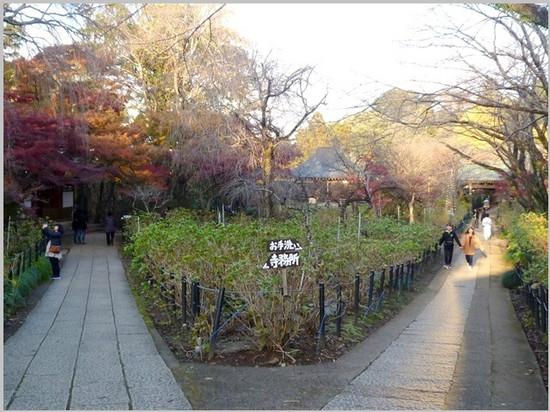 P1420094burogu_yugure