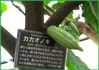 P1410290burogukakao_7